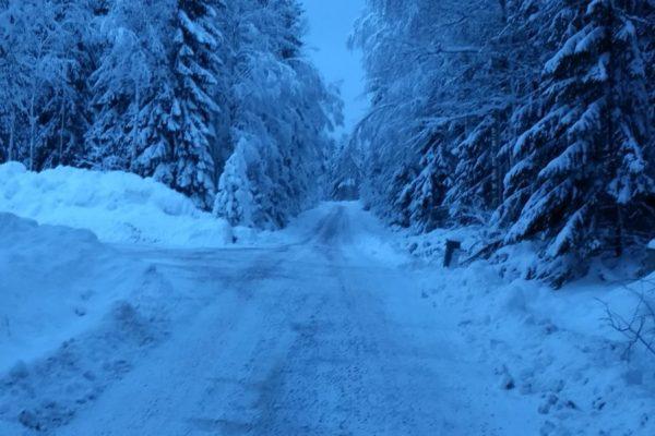 De weg in het bos